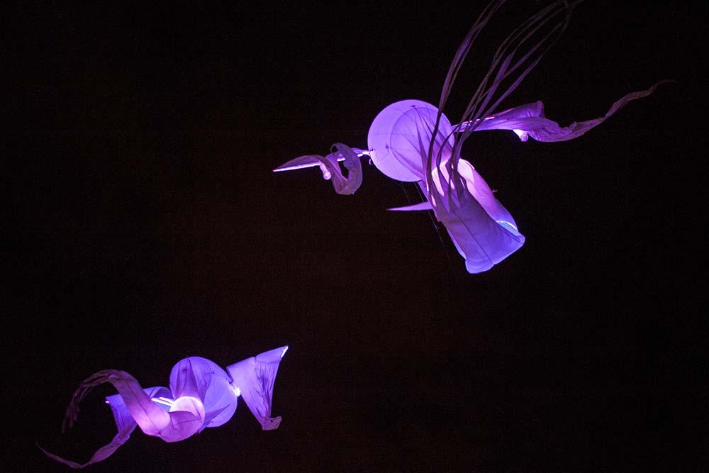 Les carpes - Les luminéoles à Cascais